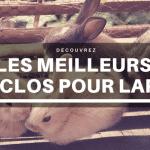 Meilleur enclos pour lapin : Guide d'achat 2021