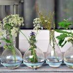 Quels végétaux choisir pour son balcon ?