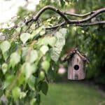 Comment aider les oiseaux à fabriquer leurs nids dans le jardin ?