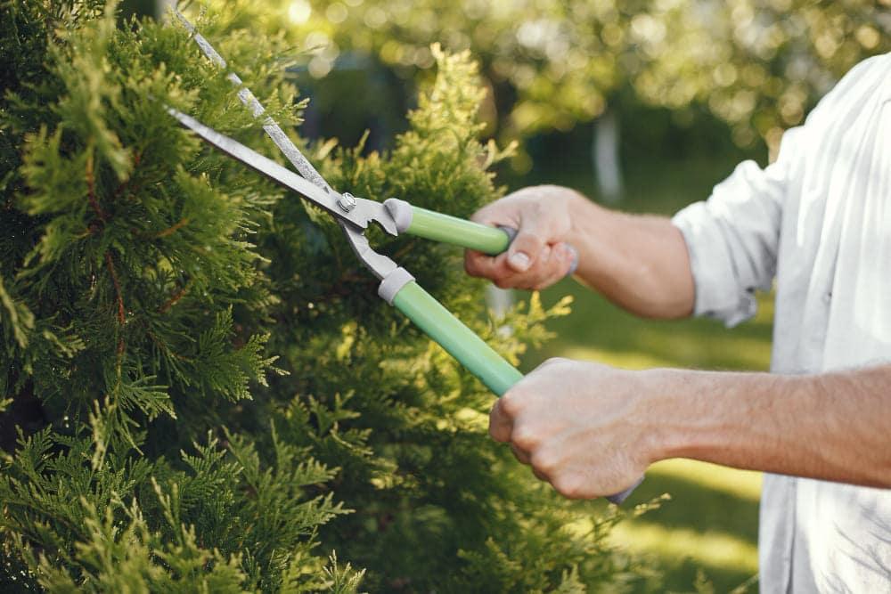 cadeaux pour jardinier