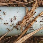 Comment se débarrasser des fourmis efficacement à l'extérieur ?