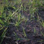 Comment semer du gazon facilement ?