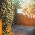 Comment végétaliser un mur extérieur ?