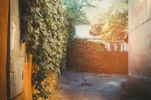 végétaliser un mur extérieur