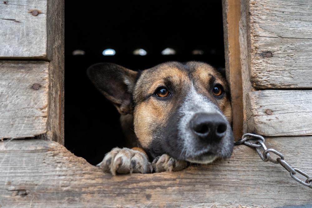 chien dans une niche en palette